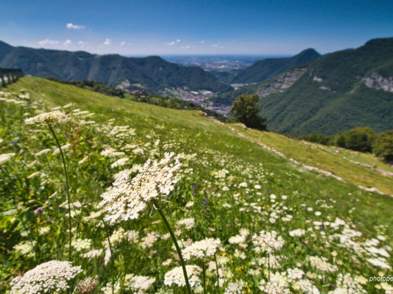 grass with white flowers,  mountains on the background