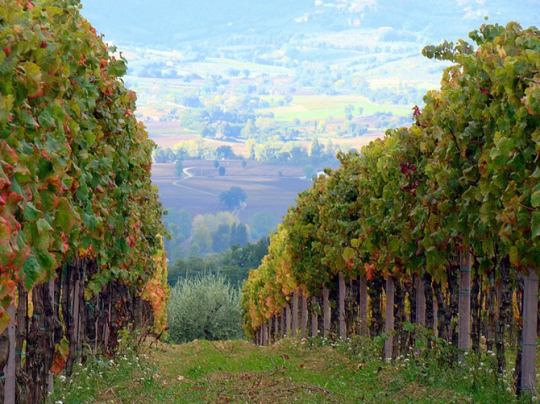 Vineyards of Montefalco, which produce the delicious wine Sagrentino, photo by la fattina via Flickr
