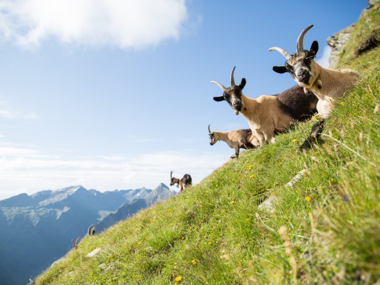 Unspoiled nature in Moos in Passeier