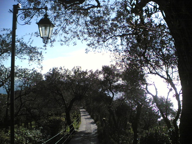 The path passes across the Monte Portofino, surrounded by trees