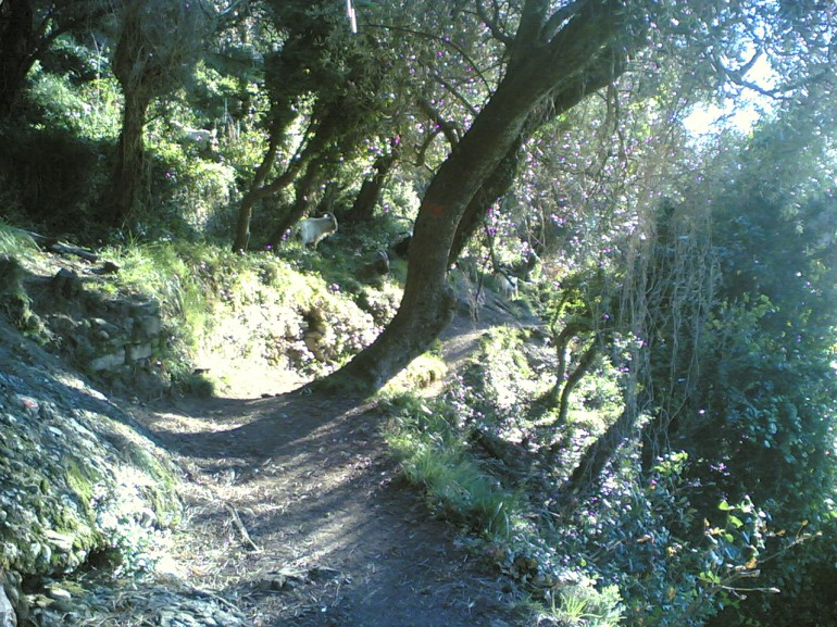 A path passes across the trees, the sun seeps through the branches