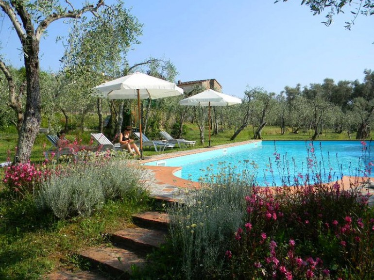 The pool among the olive trees of Villa Gaia, eco-friendly holiday house in Camaiore, Versilia, Tuscany