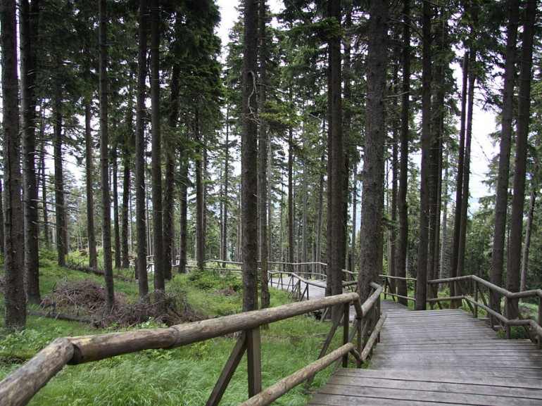 Path in Boudunicky forest