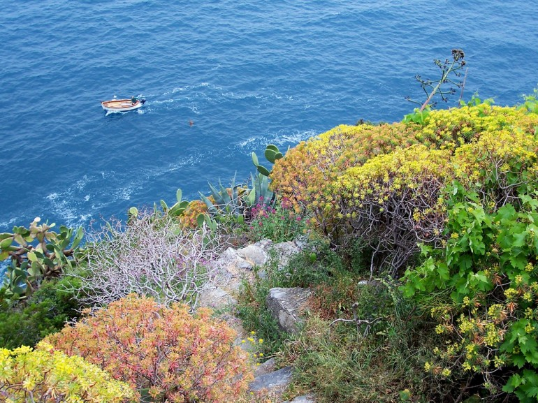 the sea seen from a hill full of plants and trees