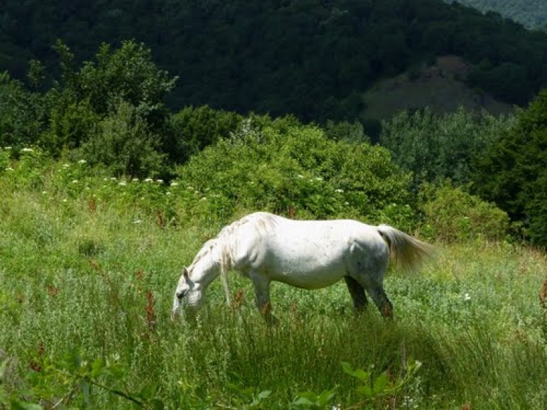 a horse in the grass