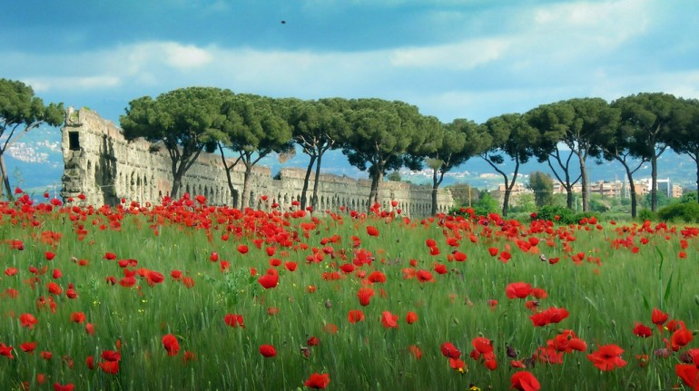 The ruins of Rome surrounded by greenery and poppies in spring.